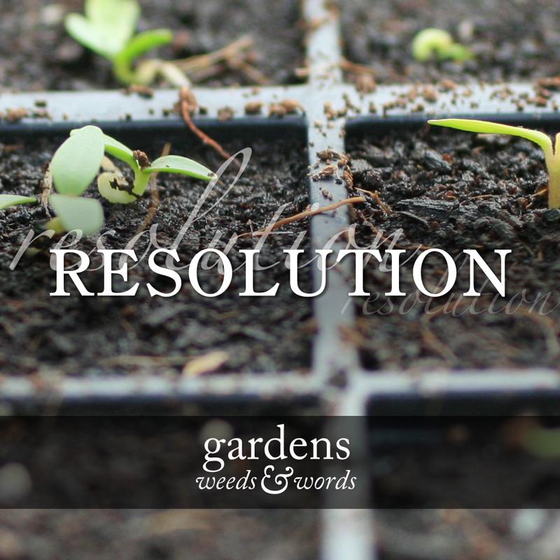resolution_header.jpg