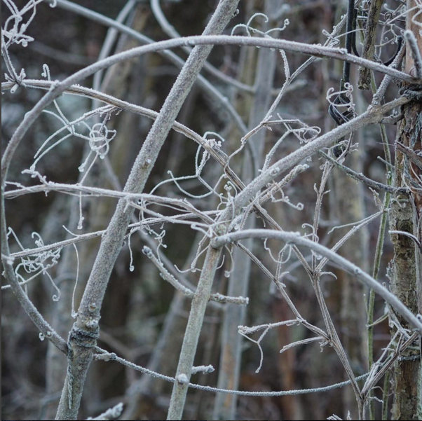 …and dull frosty days with beautiful patterns