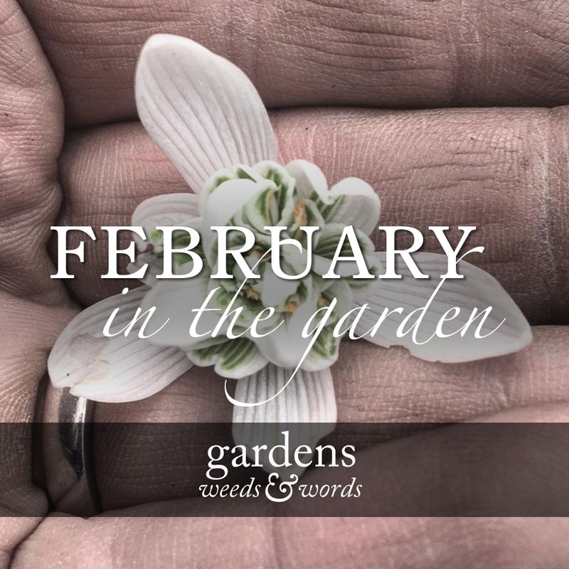 feb17_header.jpg