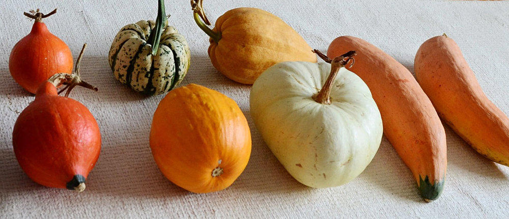 A skirmish of squashes which, whilst it clearly should be, almost certainly isn't the appropriate collective noun. Clockwise from bottom left: Potimarron (two), Sweet Dumpling, Thelma Sanders, North Georgia Candy Roaster (two), Flat White Boer, Sucrette