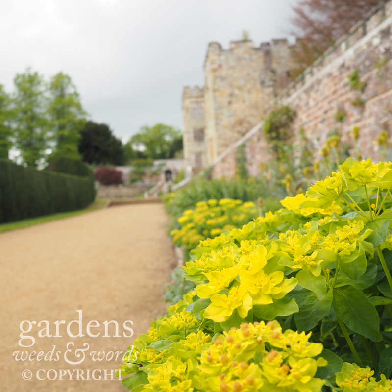 The 'blue and yellow' border – lime green in spring – leading from the paved garden to the entrance and Italian Garden.