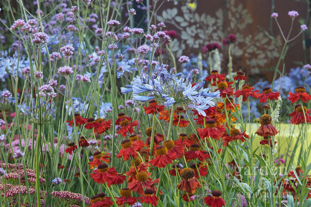 Detail from Colour Box by Charlie Bloom, RHS Hampton Court Flower Show 2017