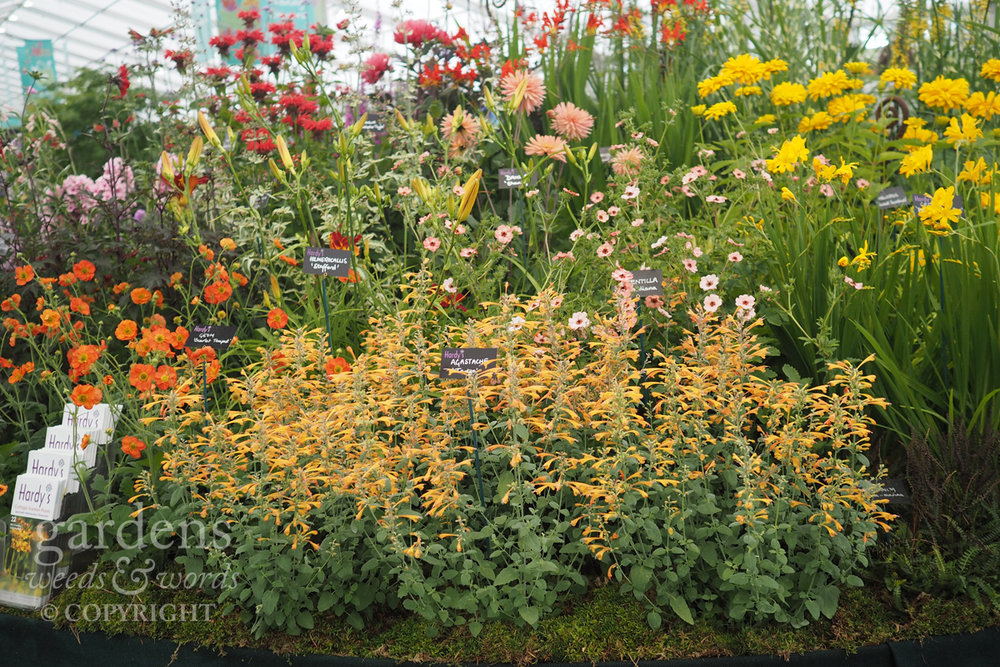 Detail from the Hardy's Cottage Garden Plants stand at RHS Hampton Court Flower Show.