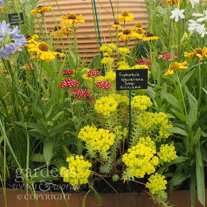 Detail from the Todd's Botanics stand at RHS Hampton Court Flower Show.