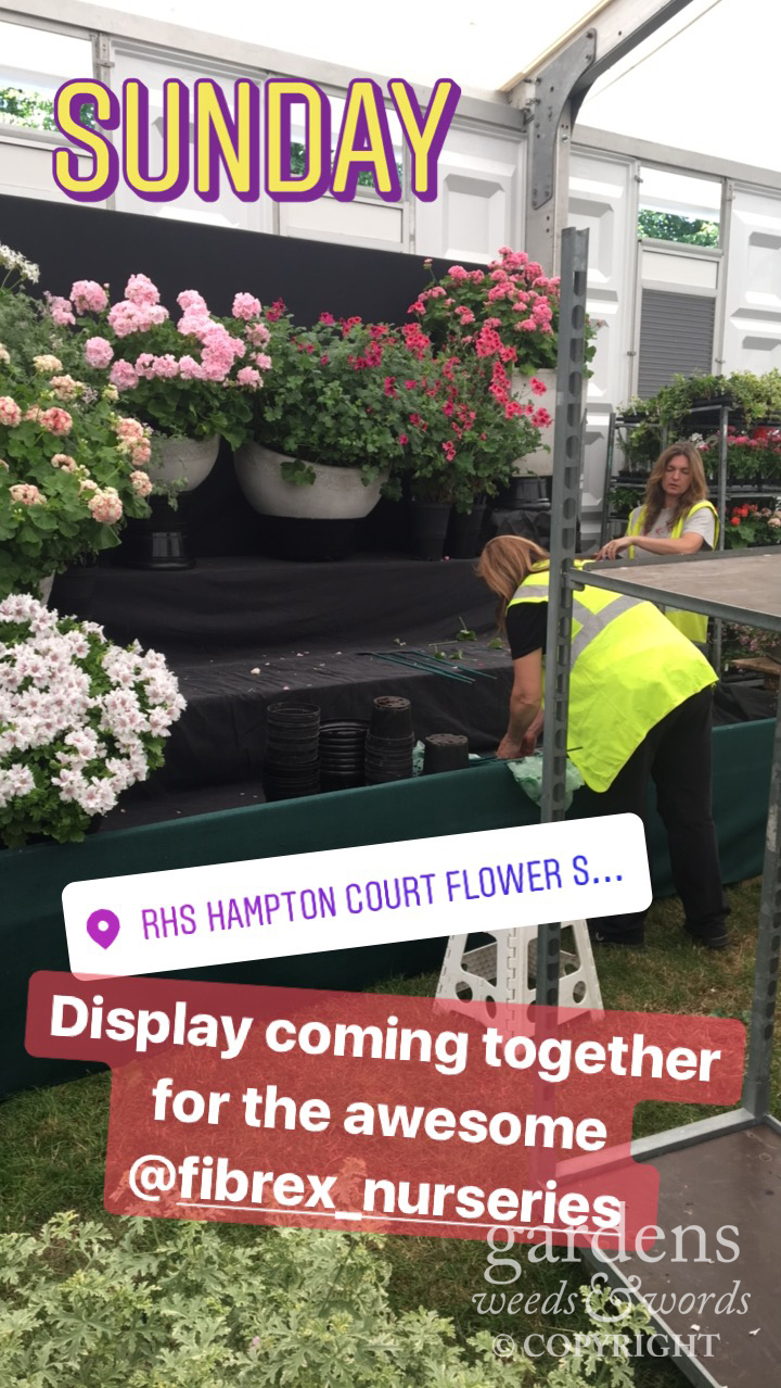 Stolen from my Instagram stories. Progress on the Fibrex Nurseries stand at RHS Hampton Court Flower Show