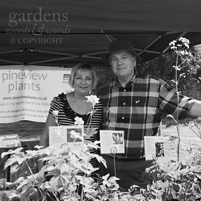 Colin and Cindy from Pineview Plants. Very sensibly, with a gazebo.