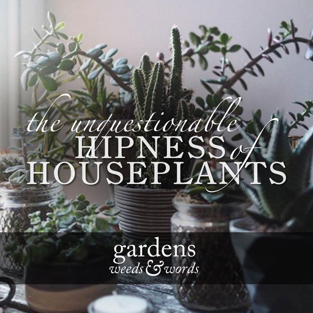HOUSEPLANTS_NEWSFEED.jpg