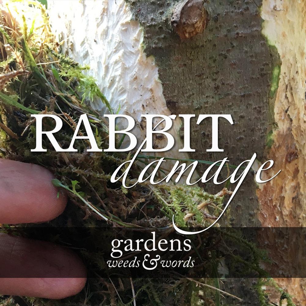 Rabbit damage title image