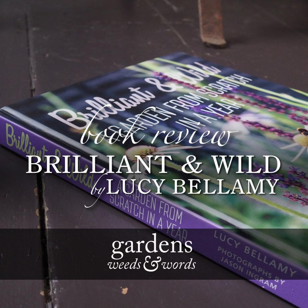 Brilliant & Wild book review