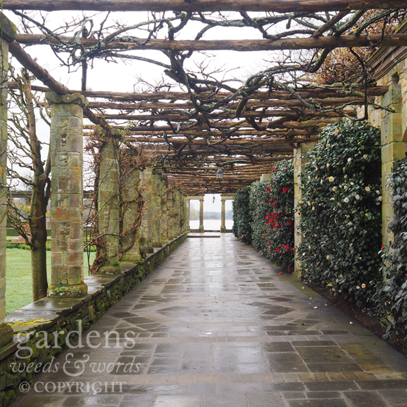 The camellia-lined pergola walk leading to a view of the lake