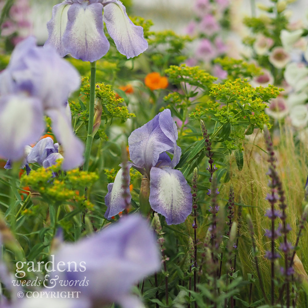 Detail from the  Todd's Botanics  stand at the RHS Chelsea Flower Show 2018