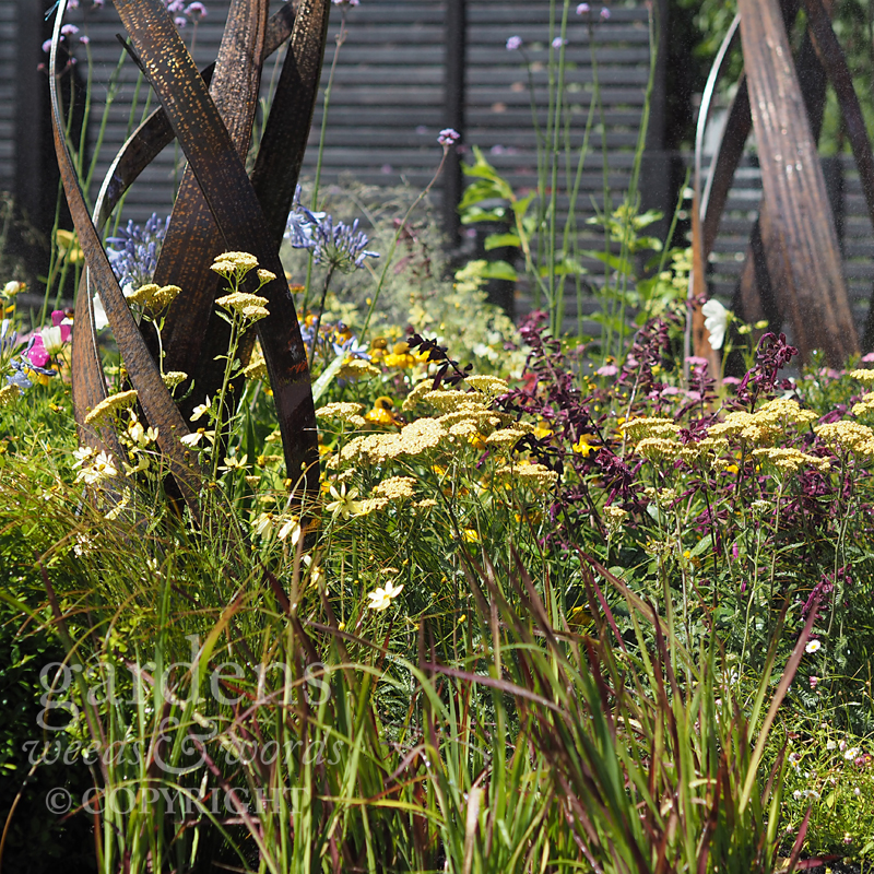 Detail from Charlie Bloom's  Brilliance in Bloom garden at the RHS Hampton Court Flower Show 2018