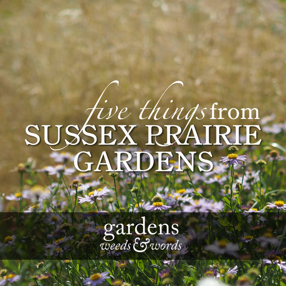 GWW_Sussex_praries_header.jpg