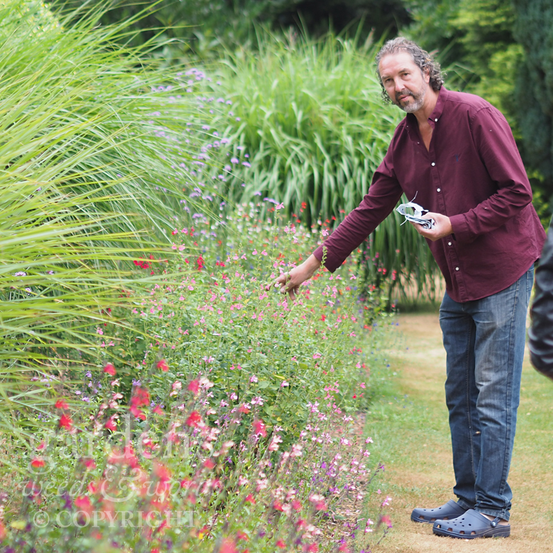 William Dyson at the Great Comp's salvia border