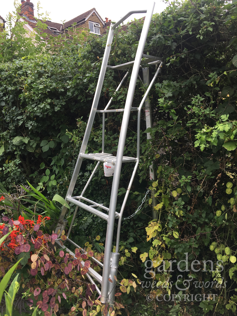Wide treads and a deep working platform make this a comfortable ladder from which to work.