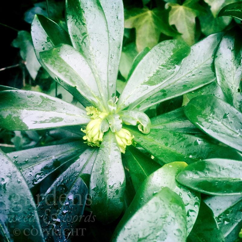 GWW-gardeninspo-day041.jpg