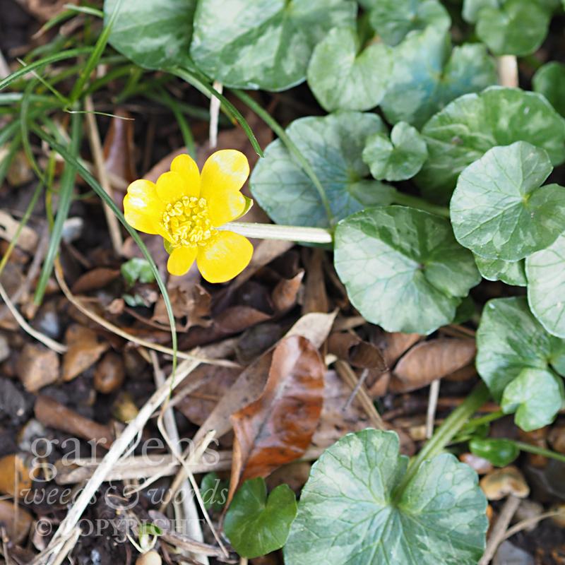 GWW-gardeninspo-day048.jpg