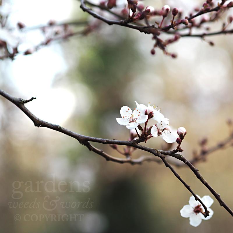 GWW-gardeninspo-day063.jpg