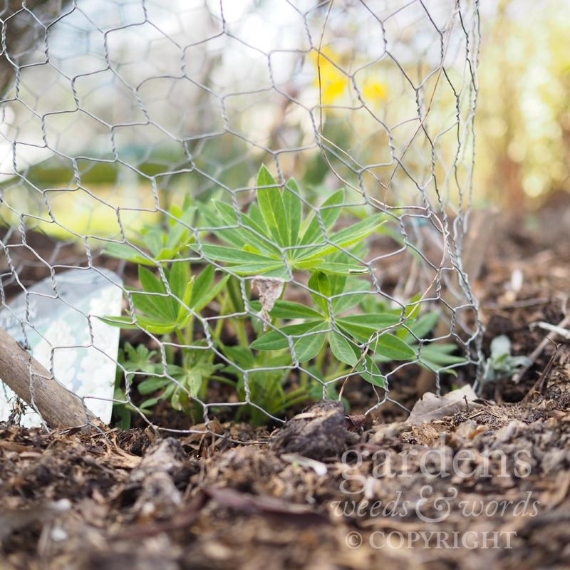 GWW-gardeninspo-day074.jpg