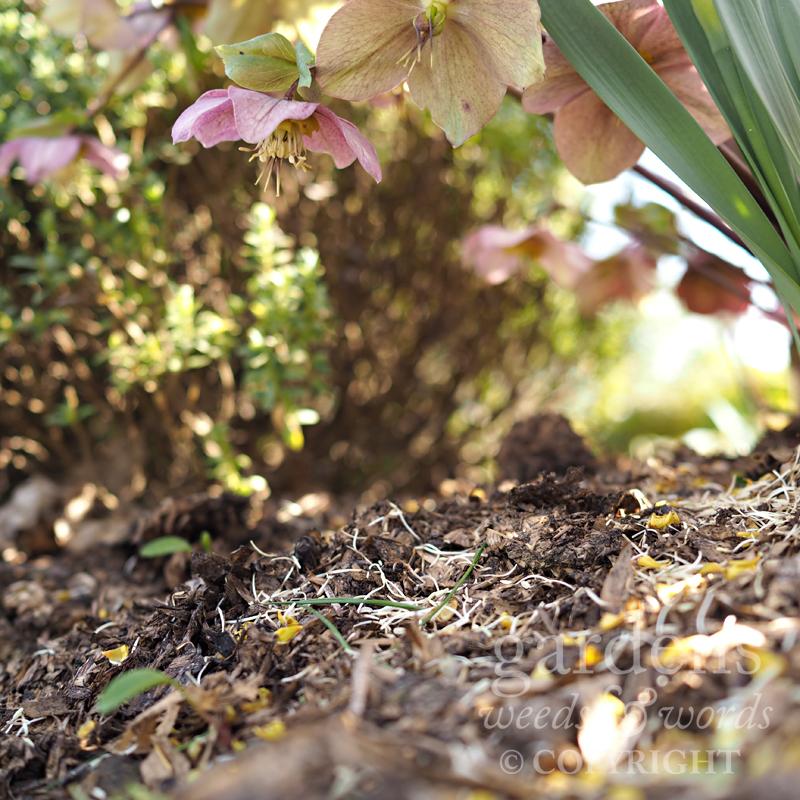 GWW-gardeninspo-day086.jpg