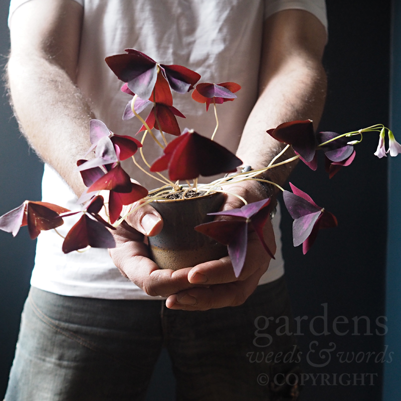 GWW-gardeninspo-day088.jpg