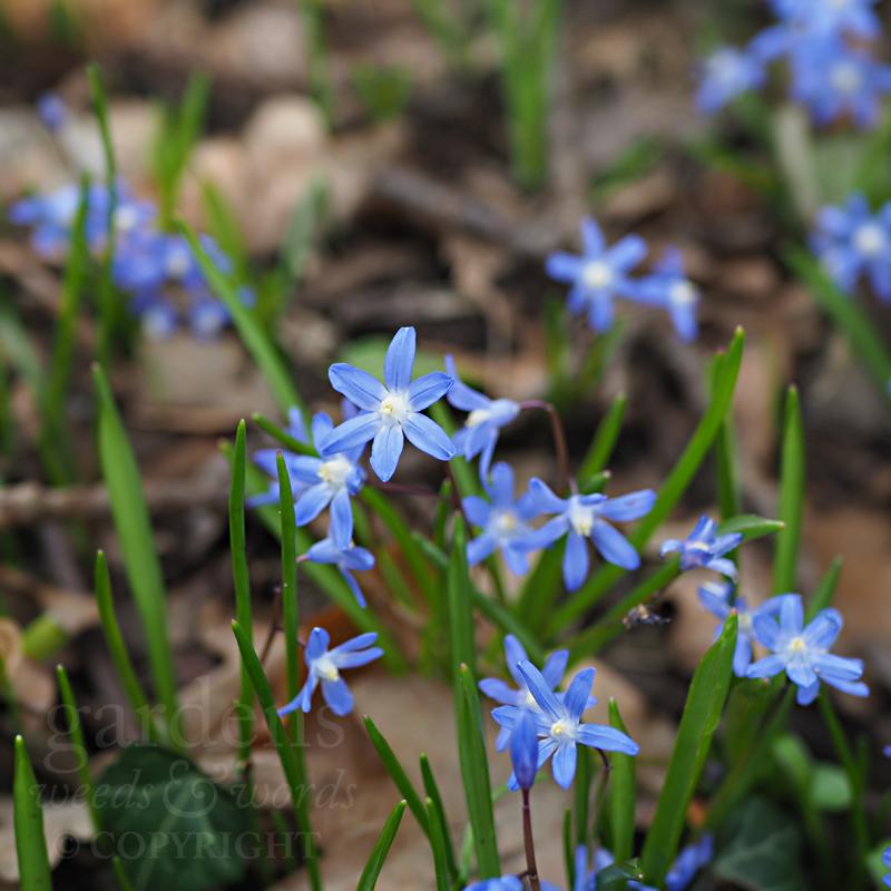 GWW-gardeninspo-day093.jpg