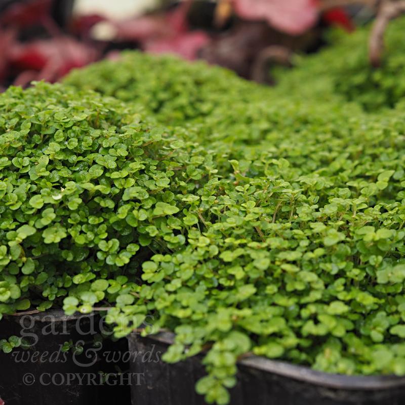 GWW-gardeninspo-day095.jpg