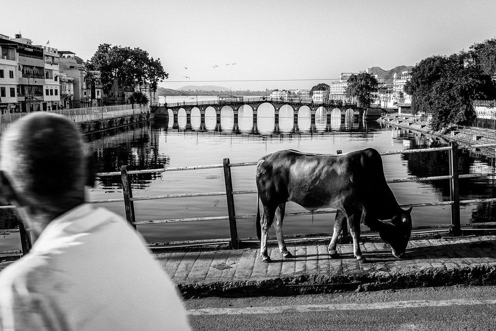 7 Holy Cow.jpg