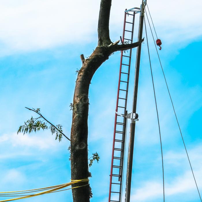 Pátzcuaro, 2011.   We are just sophisticated monkeys constructing tools to make life easy... why easy? (up, up and away!) * Solo somos changos sofisticados construyendo herramientas para hacer la vida fácil... porqué fácil? (arriba, arriba y vámonos!)