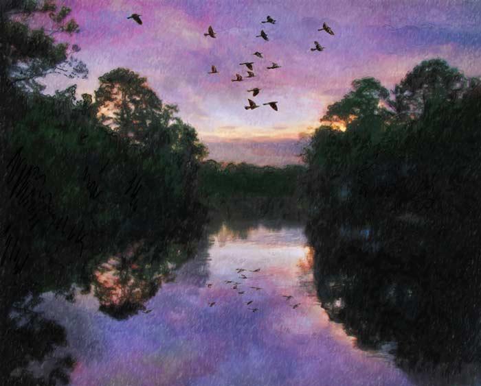 camille-barnes-childrens-book-illustration-purple-bayou.jpg