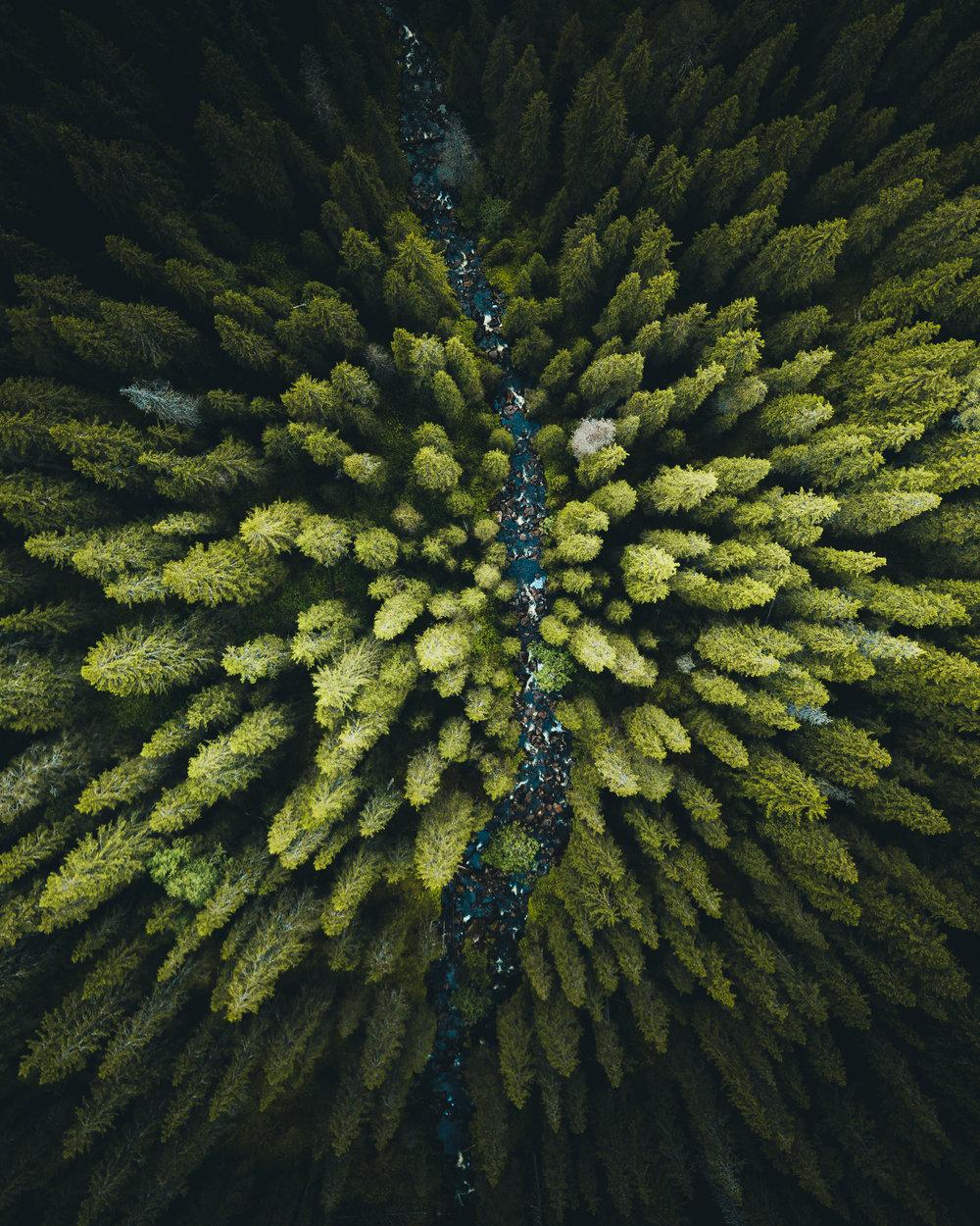 Forsen i skogen