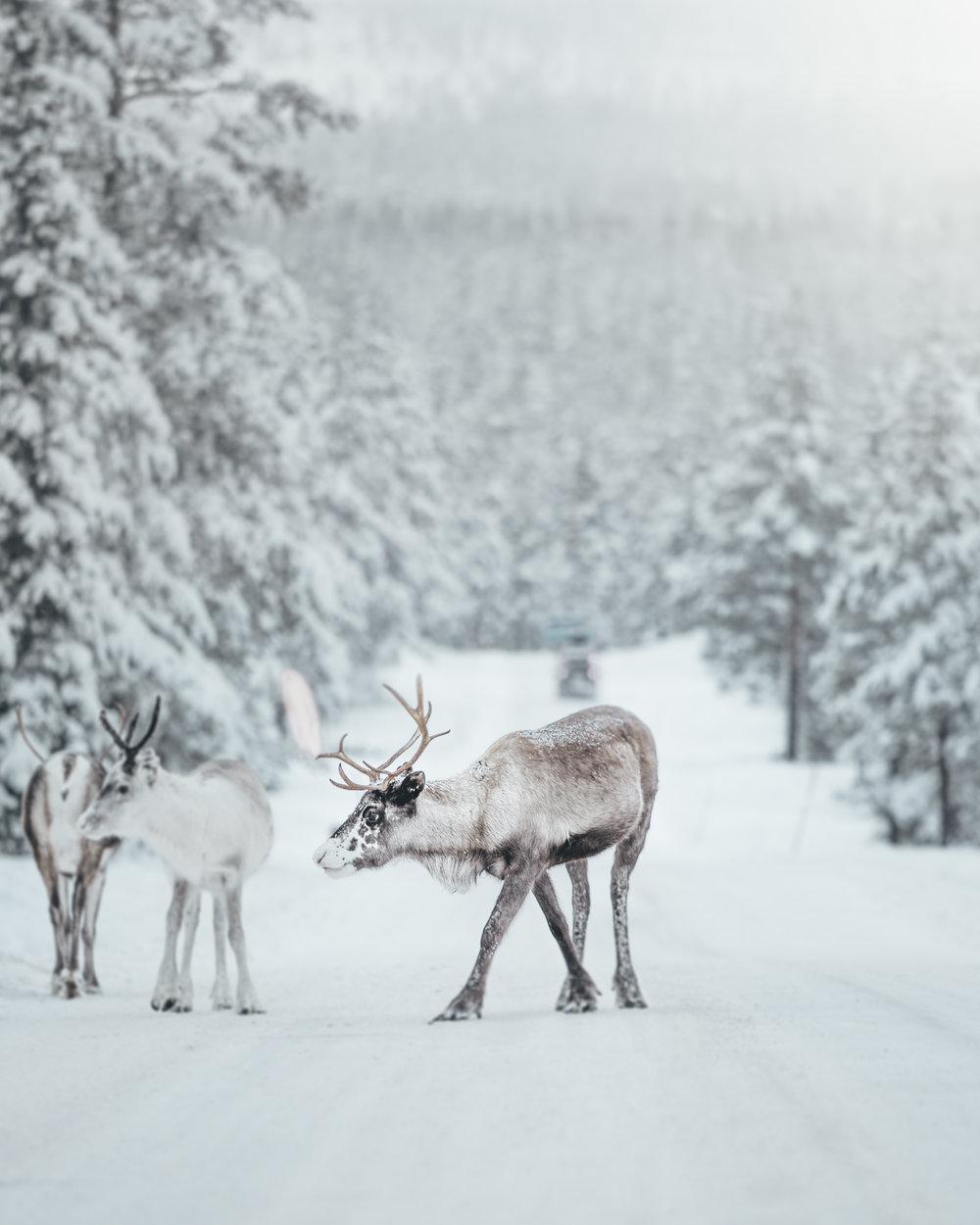 Vinter-ren