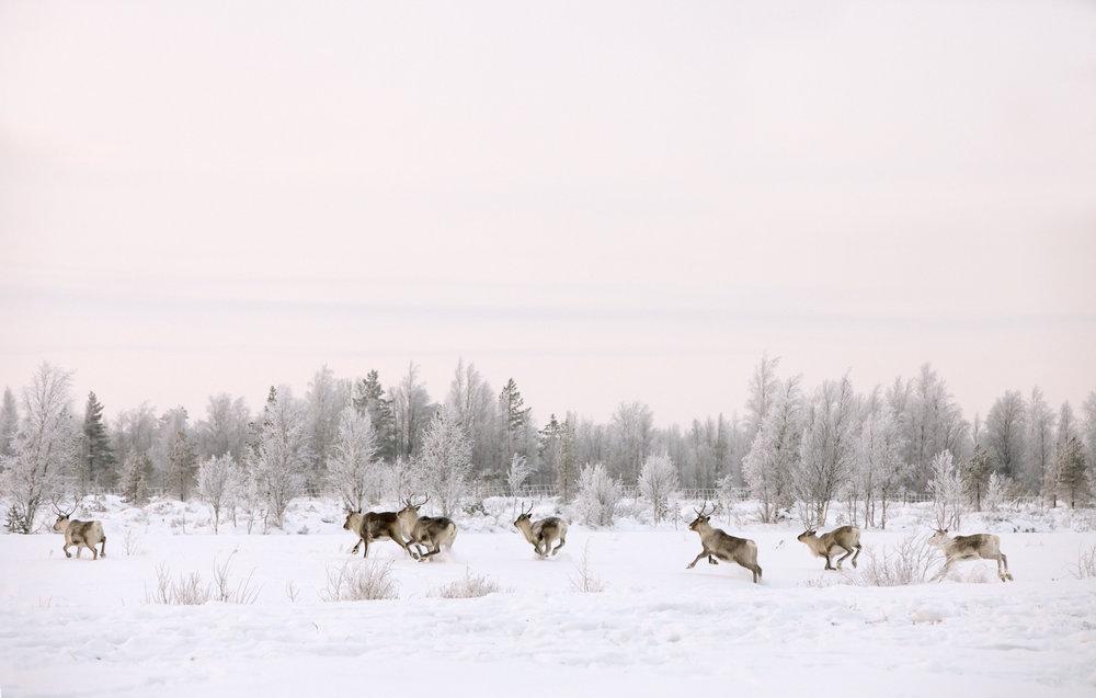 Photographer: Vastavalo / Soili Jussila