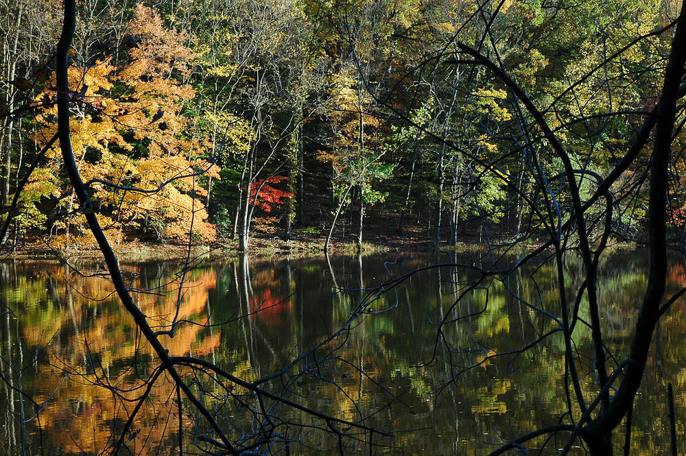 1200px-South_Mountain_Reservation_pond_in_foliage_2005.jpg
