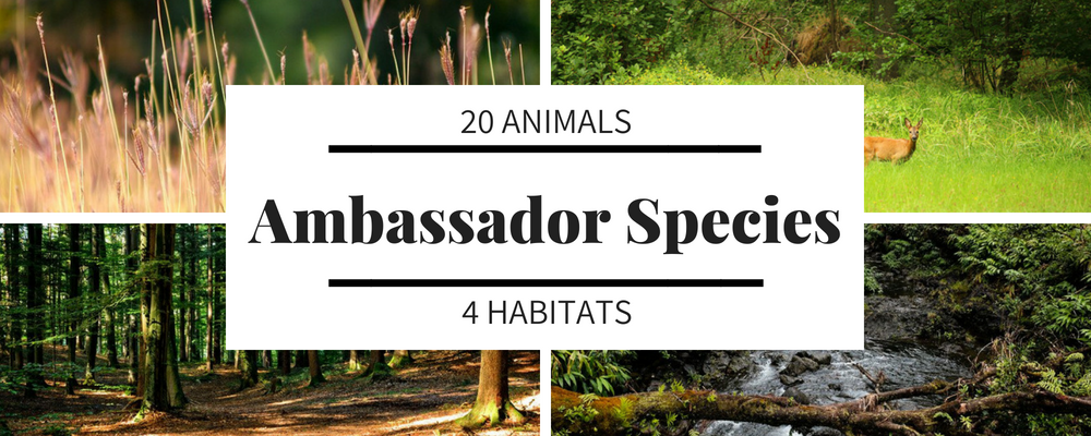 20 focus species were chosen as representatives of four habitats and niches. - These animals represent a variety of conditions that are present in high quality environments that support human, plant, & wildlife health.