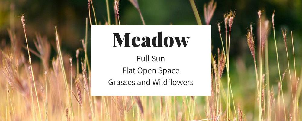 Meadow 1000x400.png