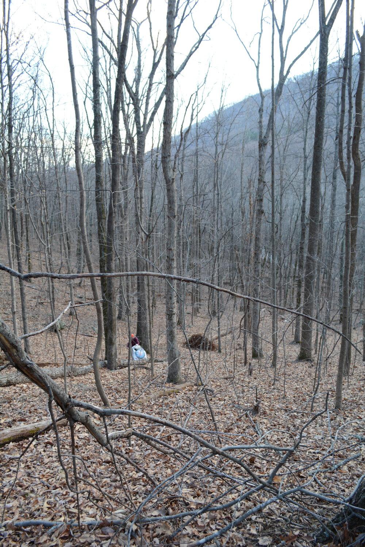David Proctor volunteered to hike 200 yards down the mountain.