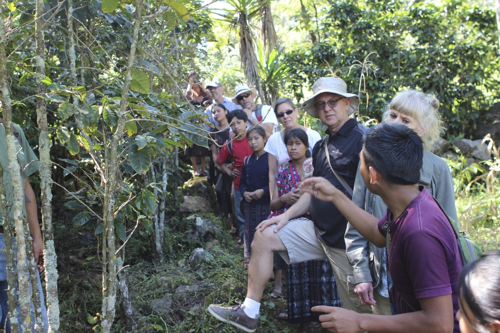 Miguel explaining the process of coffee cultivation and harvesting, in English.