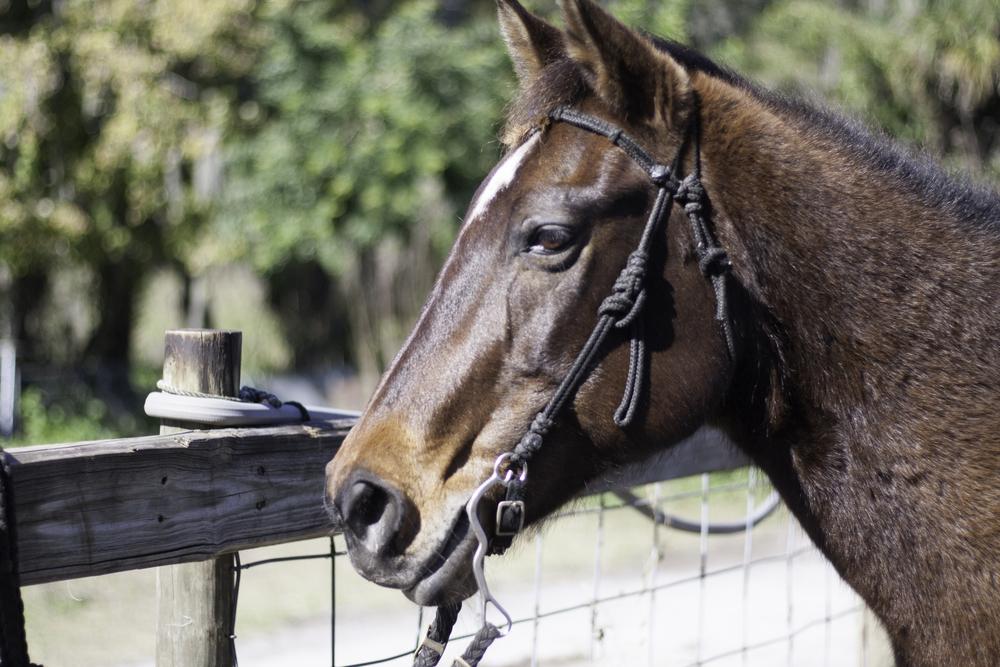 2016 Horseback Riding(1 of 68) (5).jpg