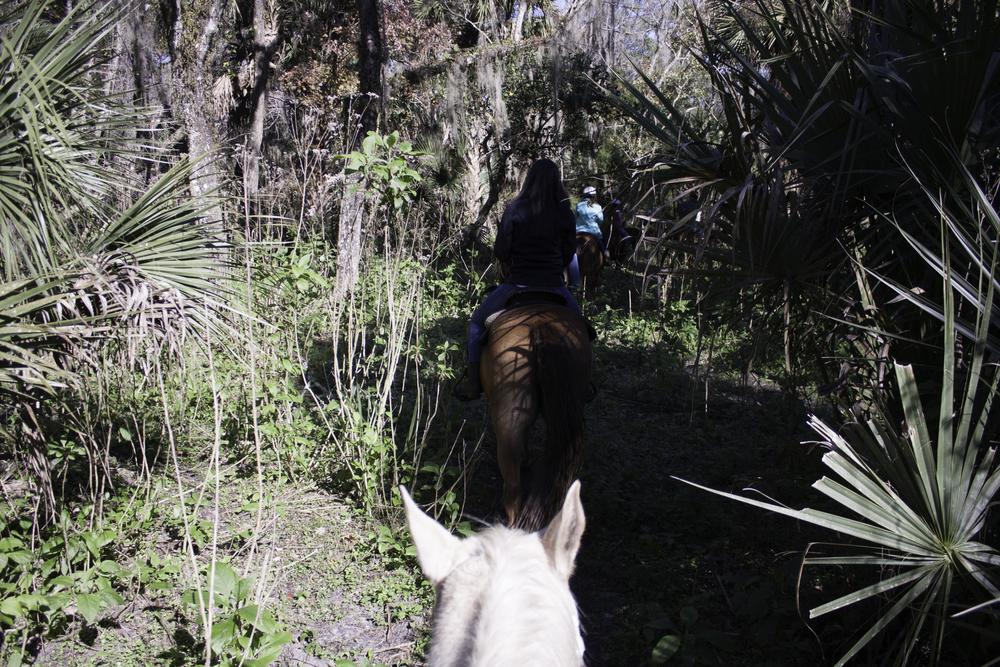2016 Horseback Riding(1 of 68) (15).jpg