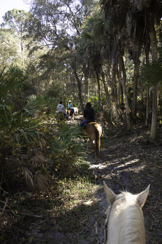 2016 Horseback Riding(1 of 68) (33).jpg