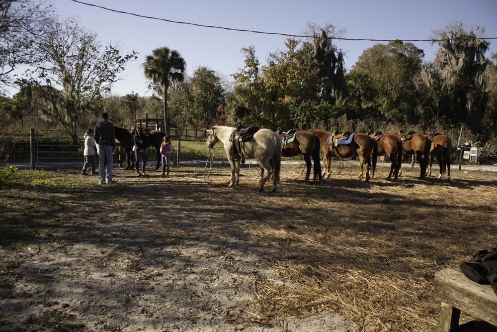 2016 Horseback Riding(1 of 68) (58).jpg