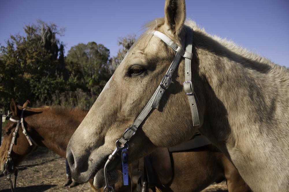 2016 Horseback Riding(1 of 68) (59).jpg