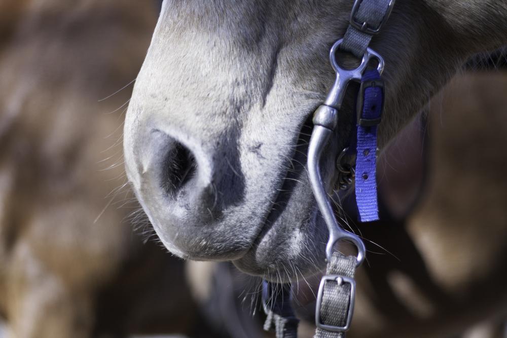 2016 Horseback Riding(1 of 68) (61).jpg