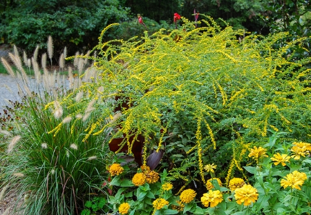 Goldenrod 'Fireworks'  Mark Levisay/Flickr