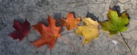 Color progression  Heather Dawn/Flickr