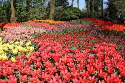 Tulips at Keukenhof in the Netherlands  Jayjay P/Flickr