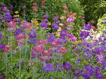 Candelabra primroses  Rachel Stelmach/Flickr