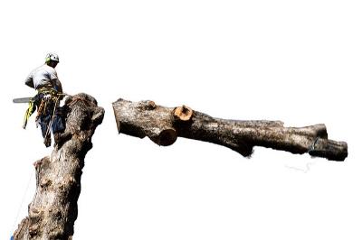 Leave tree work to professionals      Jacob Avanzato/Flickr