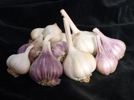 Garlic bulbs                                       USDA